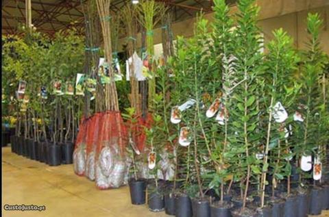 Árvores de fruto (diversas variedades)